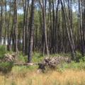 Chasse au Club de chasse des Bruyères (33)