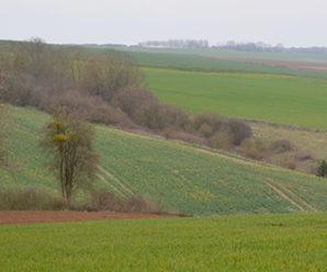 Chasse au domaine de Montapeine (02)