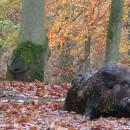 Chasse au Domaine du Bois du Ham (62) (59)